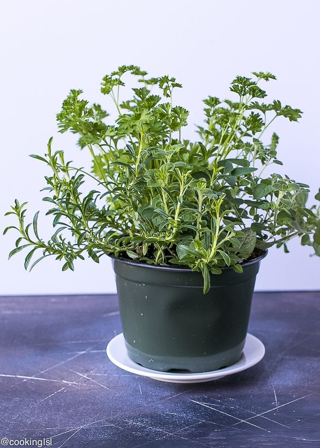 Cauliflower Olive Tapenade
